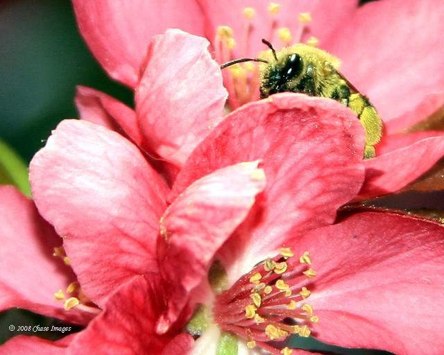 Got Pollen!!!