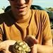 baby tortoise. 07. by lindsey kraay