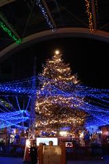 Odaiba Christmas illumination