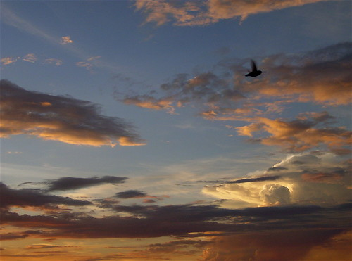 sunset arizona hummingbirds prescott