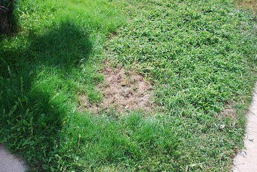 Lawn Grub Control in 2012