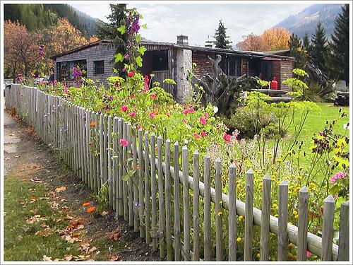 autumn mountain flower landscape austria österreich herbst blumen berge alpen landschaft soe steiermark eisenerz golddragon citrit theunforgettablepictures naturemasterclass damniwishidtakenthat jediphotographer