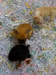 New Pet Shop opened near WaMu