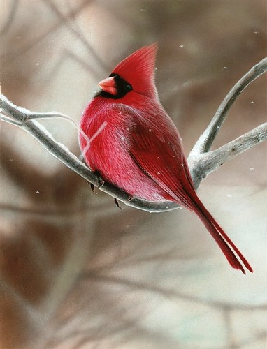 Painting of a Cardinal on a Snowy Branch