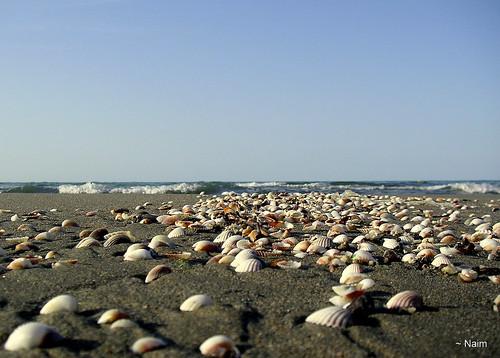 autumn landscape seashell mazandaran soe waterscape caspiansea bej mywinners paololivornosfriends noorbeach