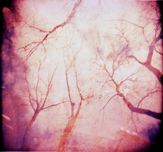Holga [Organic] Dream