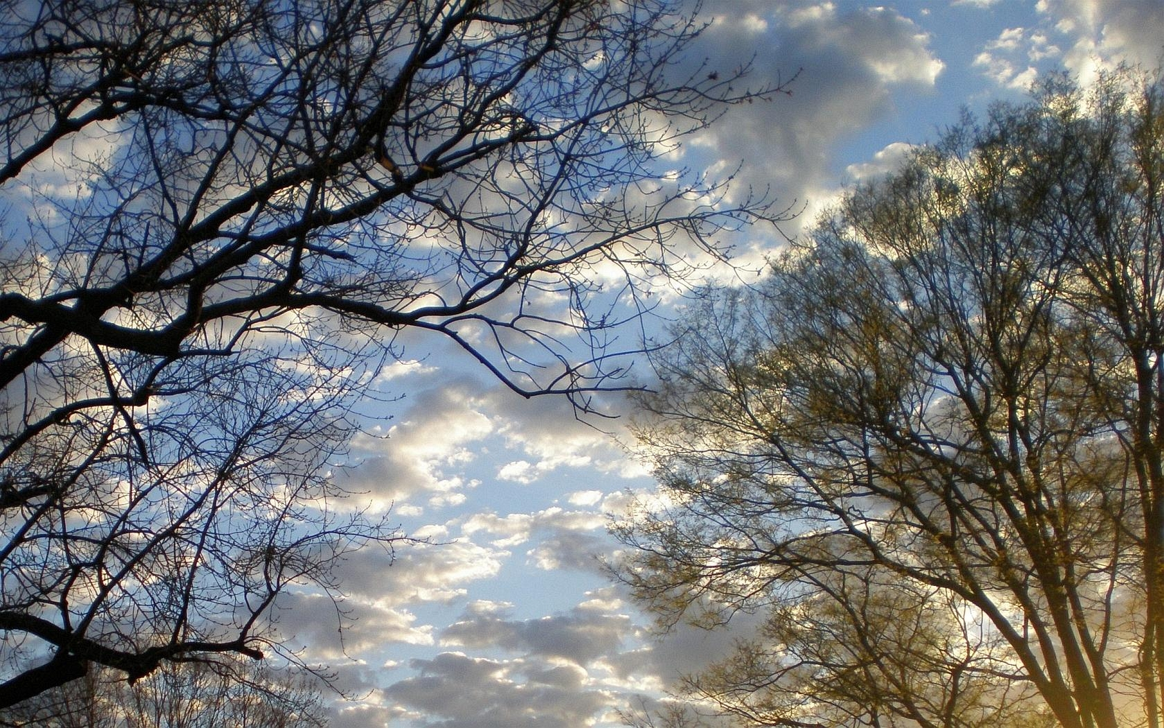 Image result for louisville kentucky winter trees