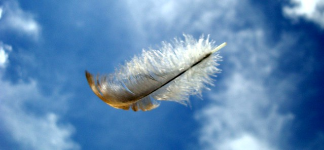 The Feather & the Wind!!