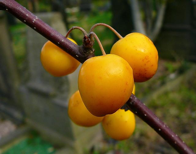 Header of fruitfulness