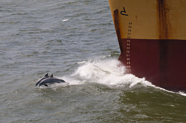Two Dolphins and a Ship