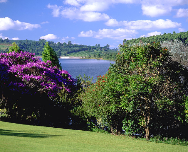 White River South Africa  city photos gallery : View from White River South Africa | Subtropial Splendor ...