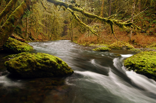 oregon pacificnorthwest creeks marioncounty fav10 diamondclassphotographer abiquacreek goldstaraward scenicsnotjustlandscapes