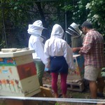 Beekeeping in Alphabet City