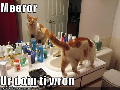 funny-pictures-mirror-cat