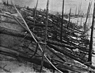 Tunguska Tree Damage