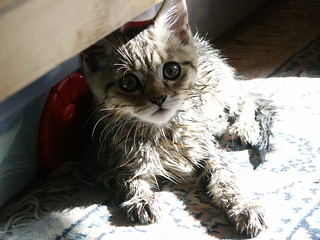 Wet Kitty 2