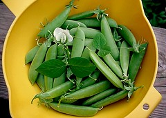 Gary's Sugar Snap Peas in the Vintage Yellow Tupperware Collander/Strainer
