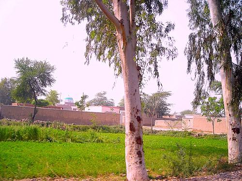 pakistan green field village punjab dgk dgkhan deraghazikhan mirjee dgkhan30km