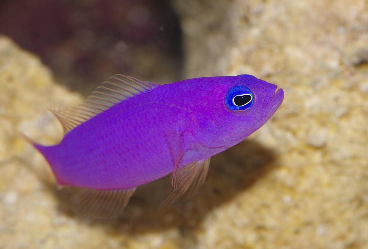 Pics for purple fish for Fish fish fish fish fish