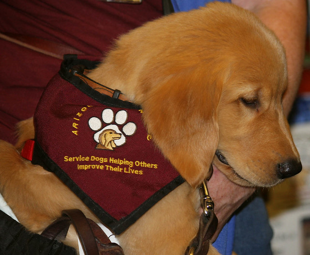 Hearing Dogs Trained In Ont
