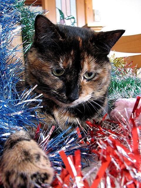 """i can haz tinsel 4 my christmas tree?"""