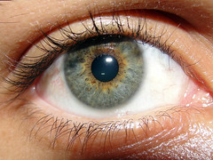 iris, vision care, head, macro photography, eyelash, eyelash extensions, close-up, eye, organ,