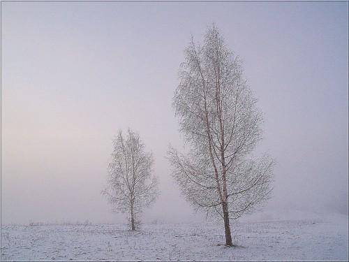 morning trees mist tree misty fog landscape frost foggy frosty birch puu kask puud morningfog hommik udu mistysunrise maastik foggysunrise härmatis 35faves päikesetõus olympuse400 kased mywinners welcometoestonia eliteimages janne4janne goldstaraward udunepäikesetõus udune