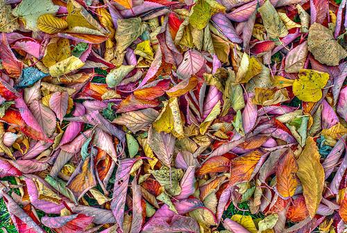 Color chaos by www.mathiasvejerslev.dk
