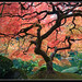jap_garden_maple_tree by ahp_ibanez