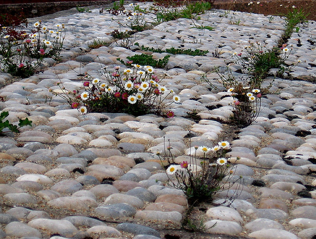 Pebble Garden Flickr Photo Sharing