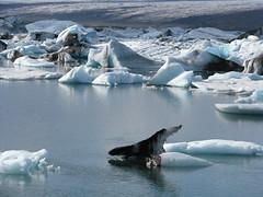 arctic ocean, arctic, winter, glacial landform, ice, glacier, sea ice, iceberg,