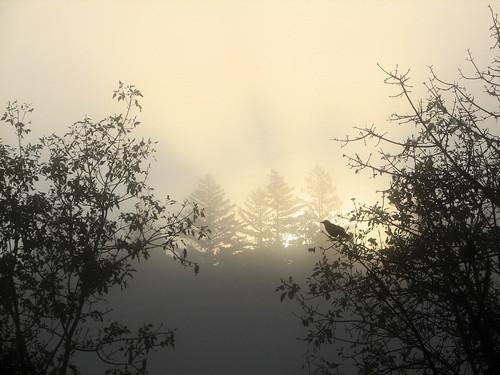 morning fog sunrise crow brooktrails