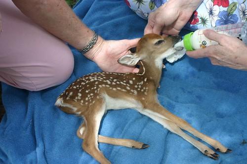 Baby Rupert being bottle fed