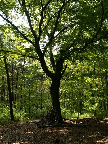 Dort hinten am Seerosenteich steht ein Baum 364