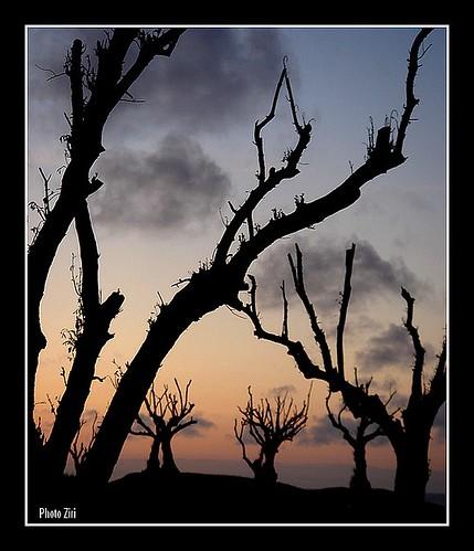 "africa sunset photography photo twilight zonsondergang tramonto foto sonnenuntergang image northafrica morocco maroc maghreb puestadesol dämmerung crépuscule marruecos 日落 marokko rabat marrocos solnedgang afrique skumring crepúsculo crepuscolo postadesol günbatımı ηλιοβασίλεμα 일몰 黄昏 seher 日没 menzeh afriquedunord المغرب tusmørke flickrsbest מרוקו 摩洛哥 skymmning 황혼 peachofashot lesamisdupetitprince דמדום العربي"""