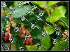 Glistening Jewels
