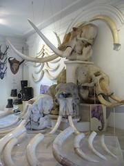 Museum Sultan Abu Bakar