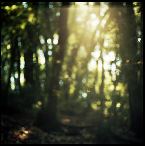 trees light blur 120 film skyline forest kodak fnd hasselblad portra palabra 400nc castlerockstatepark cal09 120mmcf
