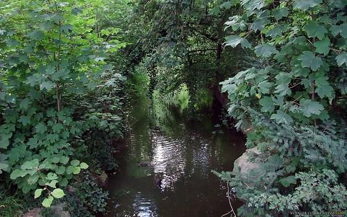 Canards au bois de Vincennes