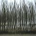 alberi by morillo