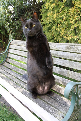Charlie meerkat on a bench