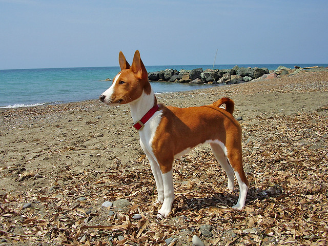 The 6 Quietest Dog Breeds