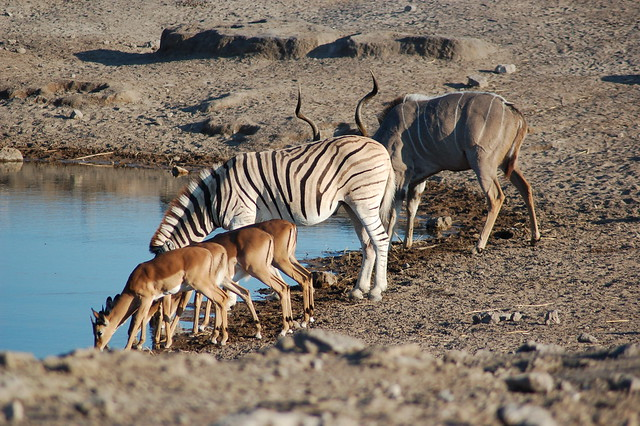 Parque Nacional Etosha, Namibia
