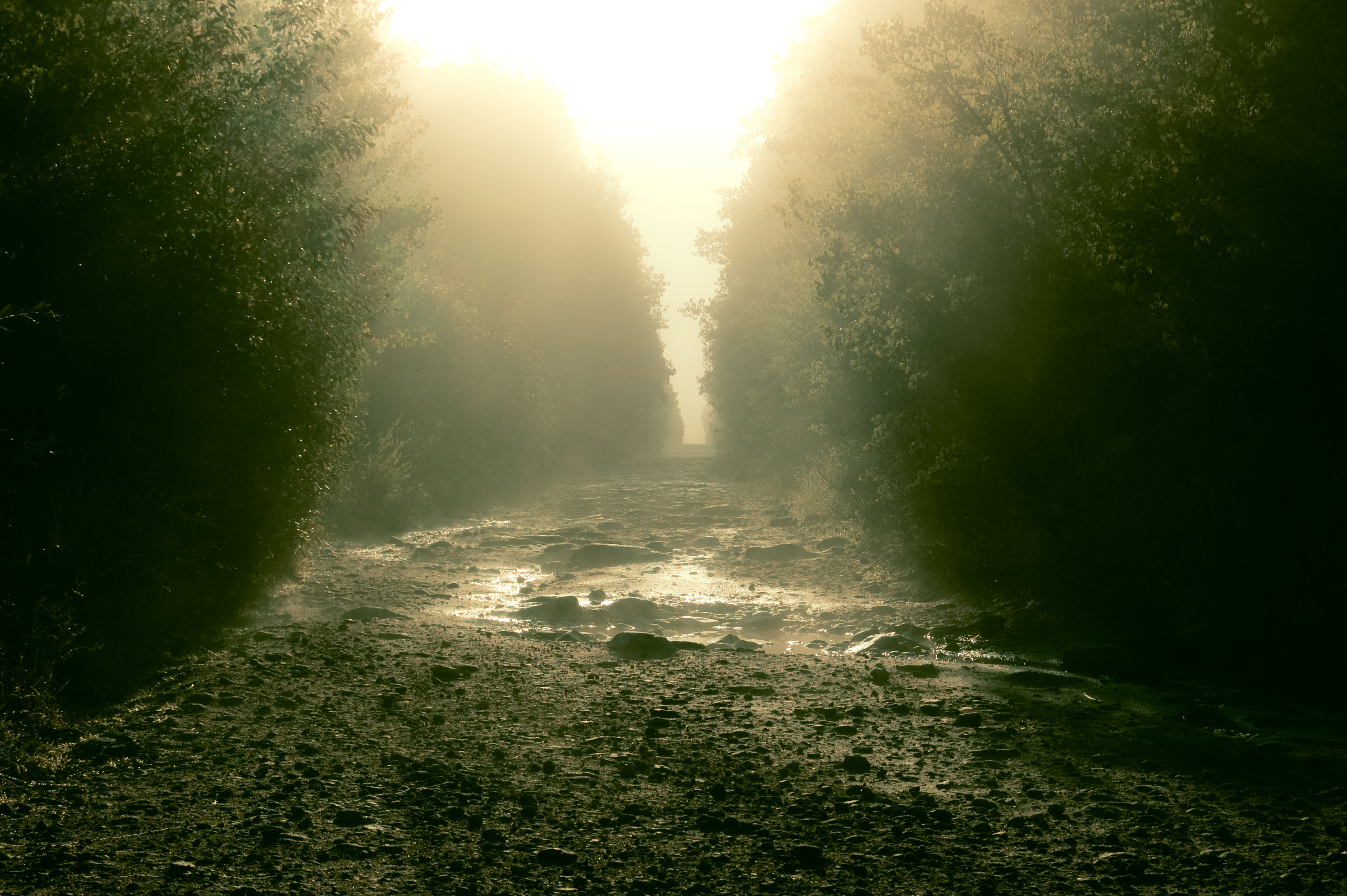 Sunrise forex mg road