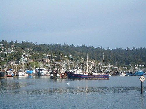 Harbor at Newport, OR 1 | by volkspider