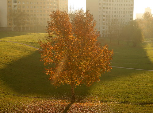 City Tree in Autumn Morning