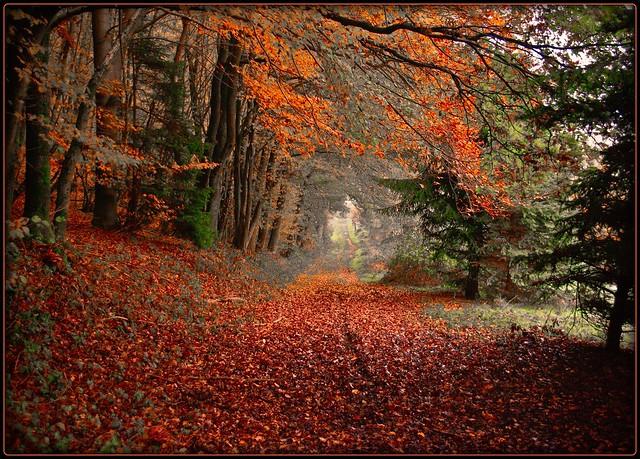Herbstweg bei Hückhausen - art version