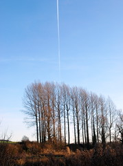 Jet Stream and Trees