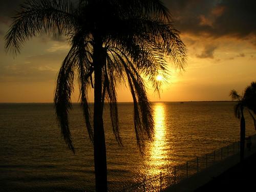 sunset beach florida palmtree puntagordafl charlotteharbor