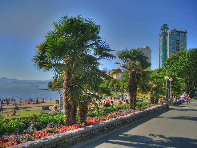 Northern Palms in English Bay